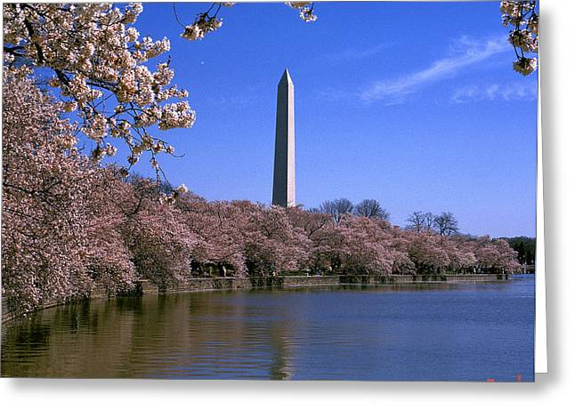 Cherry Blossoms On The Tidal Basin 15j Greeting Card