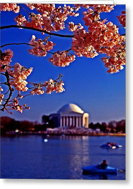 Cherry Blossoms On The Tidal Basin Greeting Card