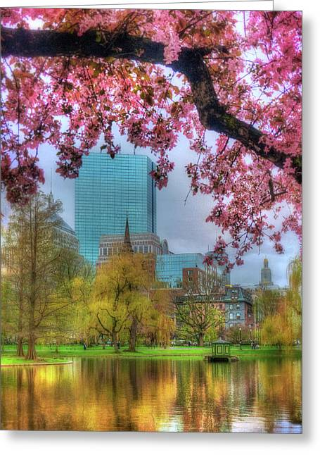 Cherry Blossoms Over Boston Greeting Card