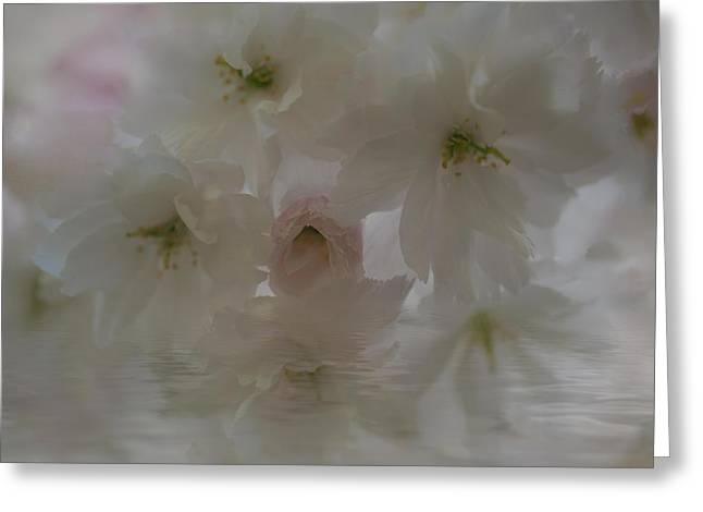 Cherry Blossoms Reflection Greeting Card by Jacqui Boonstra