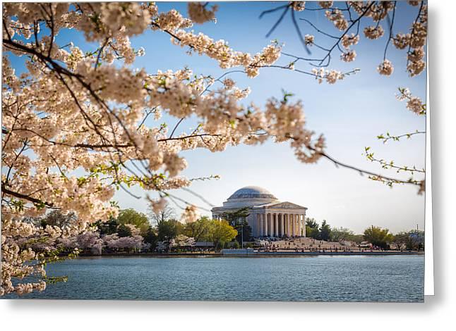 Cherry Blossoms Greeting Card by Robert Davis