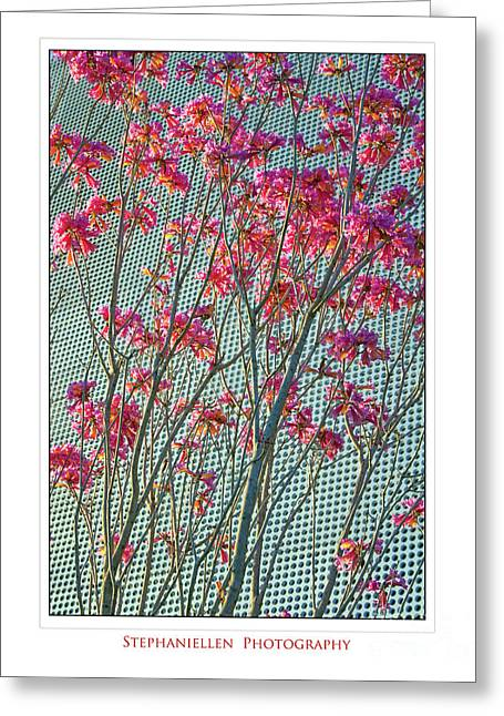 Cherry Blossoms Greeting Card by Stephanie Hayes