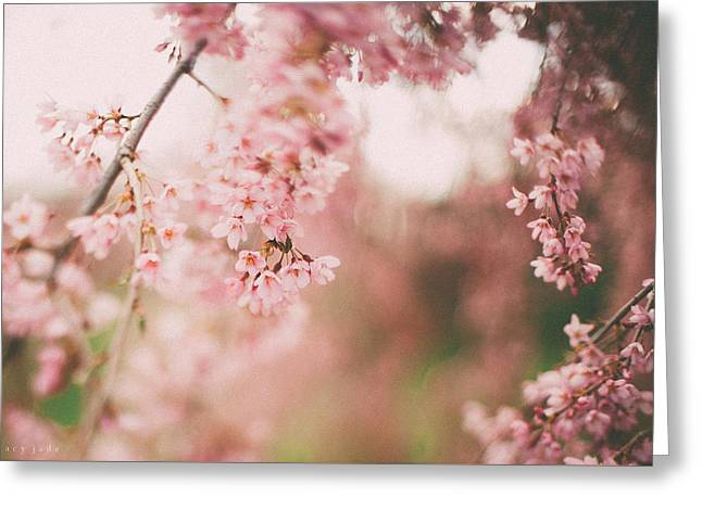 Cherry Blossoms Greeting Card by Tracy  Jade