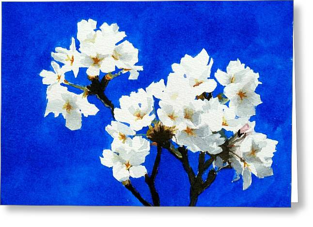 Cherry Blossoms Greeting Card by William  Nelson
