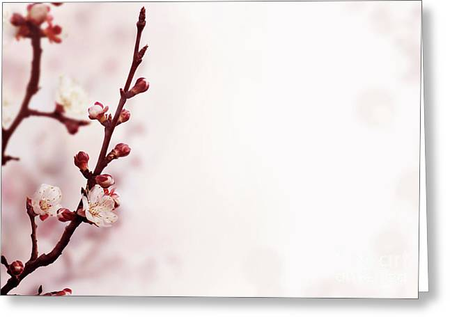 Cherry Bossom Greeting Card by Jelena Jovanovic