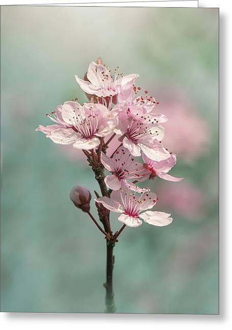 Cherry Clouds Greeting Card by Jacky Parker