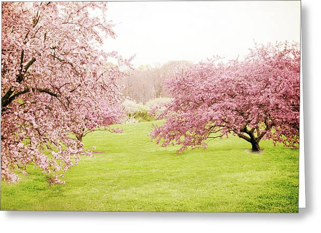Greeting Card featuring the photograph Cherry Confection by Jessica Jenney