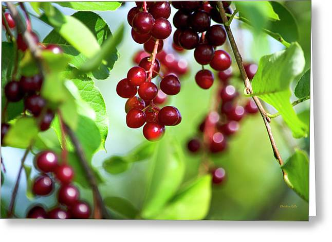 Cherry Jubilee Greeting Card by Christina Rollo