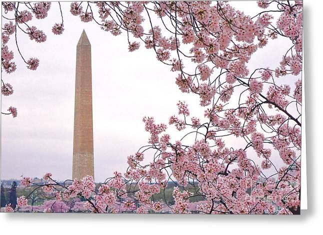 Cherry Washington Greeting Card by Olivier Le Queinec