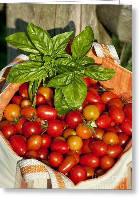 Cherry Tomato Harvest Greeting Card by John Greim
