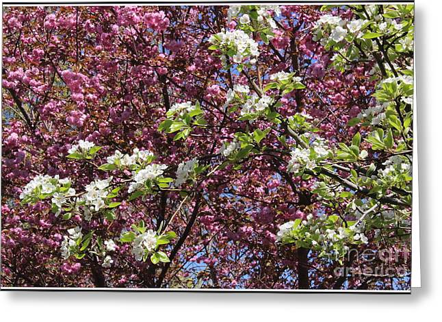 Cherry Tree And Pear Blossoms Greeting Card