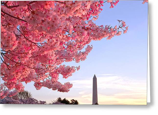 Cherry Tree And The Washington Monument  Greeting Card