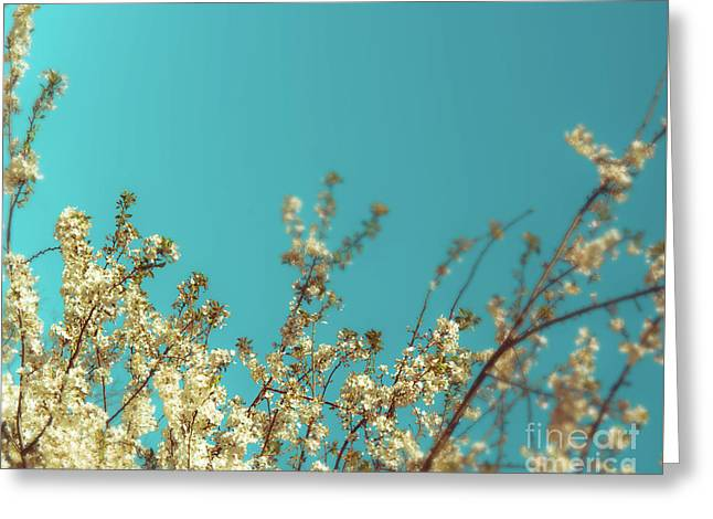 Cherry Tree Blossoms Greeting Card by Sonja Quintero