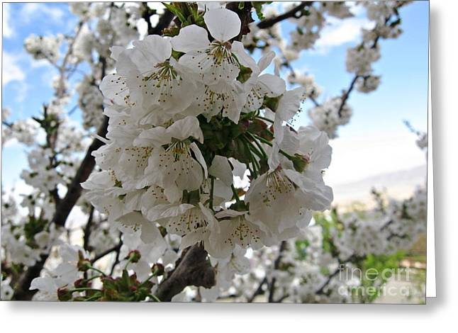 Cherry Tree Greeting Card by Cendrine Marrouat