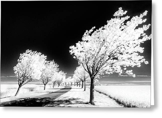 Cherry Tree Grove Wolds Way Huggate Greeting Card by Janet Burdon