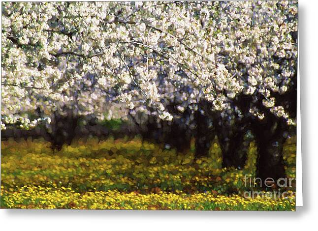 Cherry Trees And Wild Flowers Greeting Card by Robert Brown