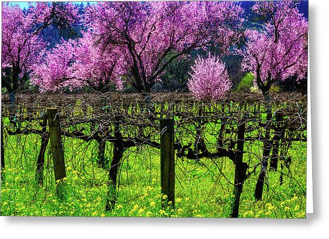 Cherry Trees In Vineyards Greeting Card