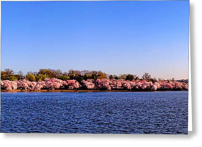 Cherry Trees On The Tidal Basin And Washington Monument  Greeting Card by Olivier Le Queinec