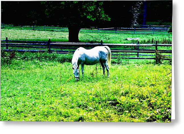 Chestnut Hill Horse Greeting Card