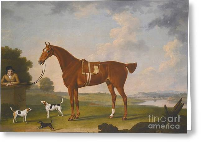 Chestnut Hunter With A Groom And Two Hounds Greeting Card