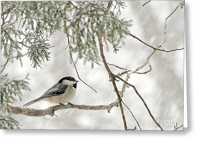 Chicadee In A Snow Storm  Greeting Card