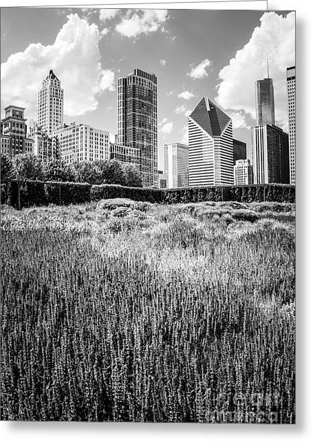 Chicago Skyline Lurie Garden Black And White Photo Greeting Card