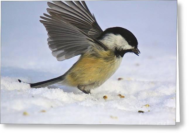 Chickadee-2 Greeting Card by Robert Pearson