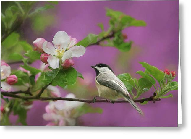 Chickadee In Blossoms Greeting Card by Lori Deiter