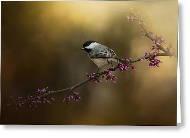 Chickadee In The Golden Light Greeting Card
