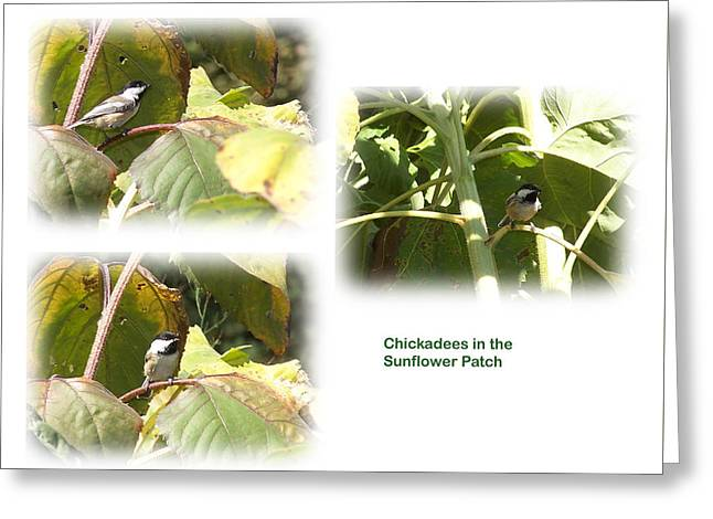 Chickadees In The Sunflower Patch Greeting Card