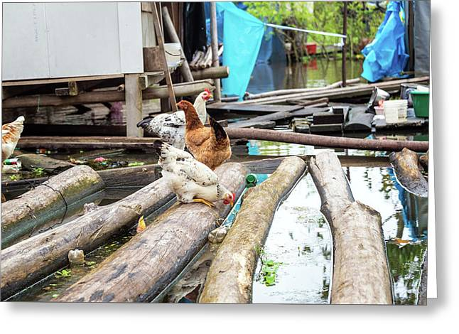 Chickens On Floating Logs Greeting Card by Jess Kraft