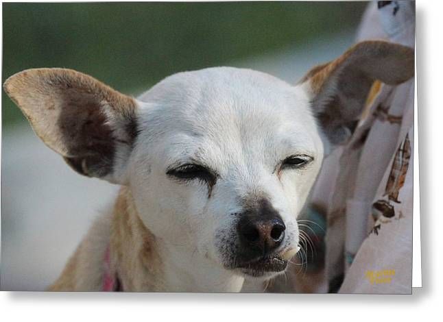 Chihuahua Snaggle Puss  Greeting Card