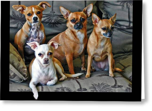 Chihuahuas Hanging Out Greeting Card