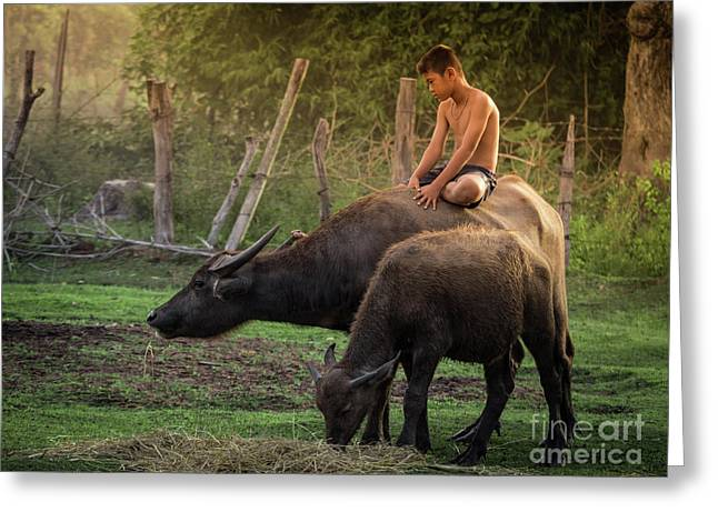 Greeting Card featuring the photograph Child Riding Buffalo In Countryside Thailand. by Tosporn Preede