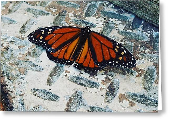 Chillin Butterfly Greeting Card