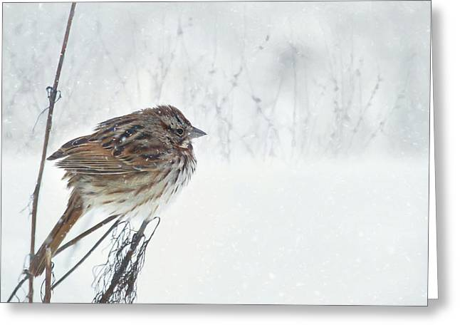 Greeting Card featuring the mixed media Chilly Song Sparrow by Lori Deiter