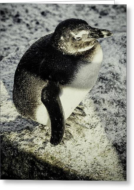 Chillypenguin Greeting Card by Chris Boulton