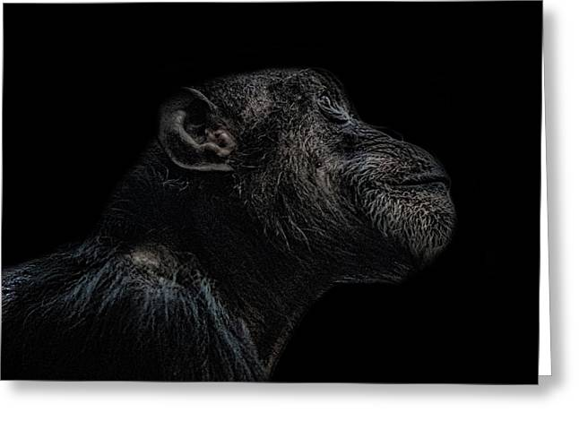 Chimp Thinking Greeting Card by Martin Newman