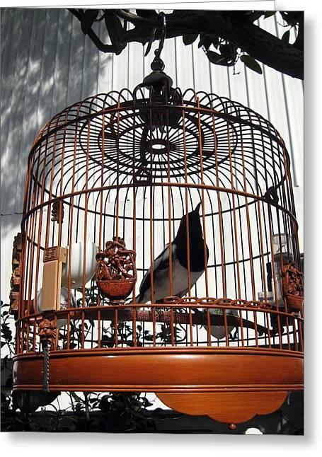 China Bird In Mahogany Cage Greeting Card