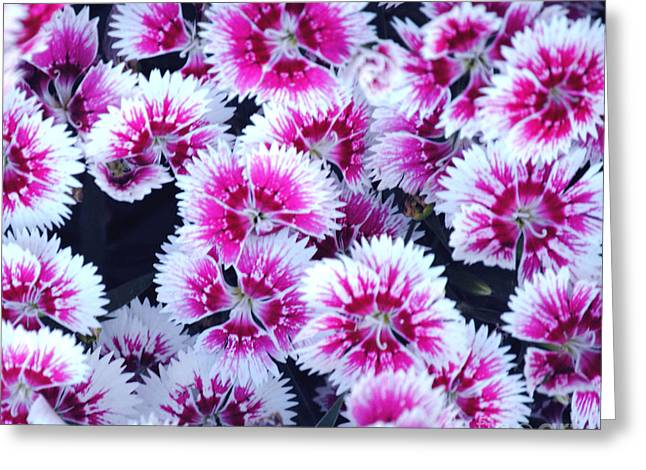China Pink Greeting Card by DiDi Higginbotham