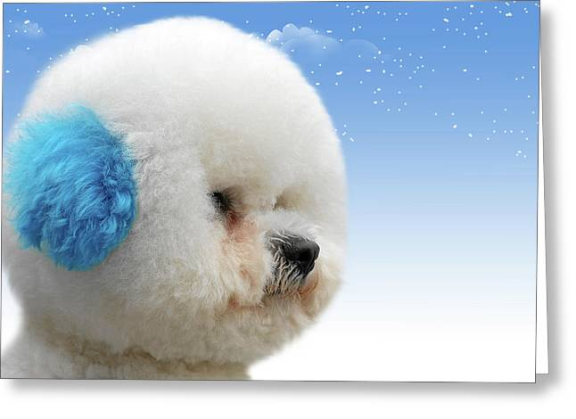 White Dogs Greeting Cards - Chinas latest craze - Dyeing pets Greeting Card by Christine Till
