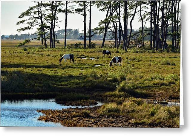 Chincoteague Ponies Greeting Card