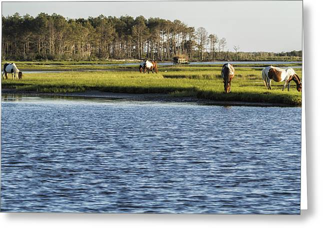 Greeting Card featuring the photograph Chincoteague Ponies On Assateague Island by Belinda Greb
