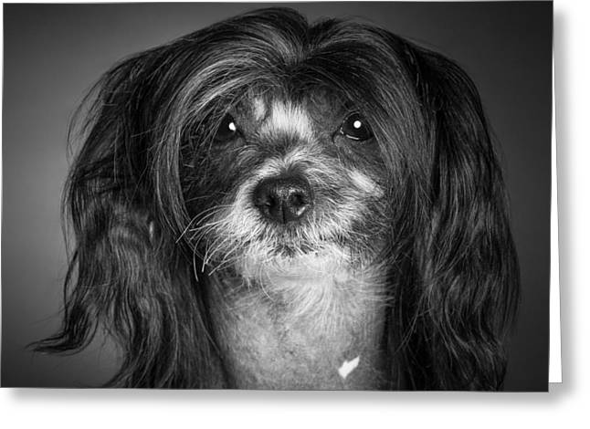 Greeting Card featuring the photograph Chinese Crested - 02 by Larry Carr