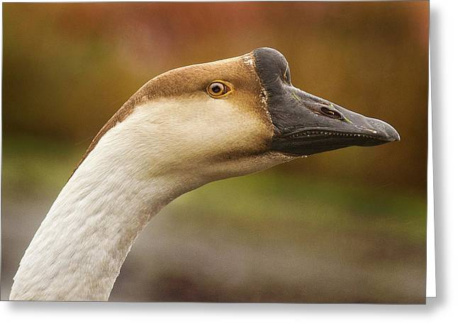 Chinese Goose Greeting Card by Jean Noren