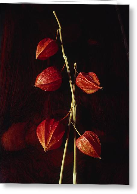 Chinese Lanterns Greeting Card by Art Ferrier