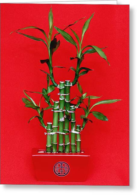 Chinese Luck Bamboo Greeting Card