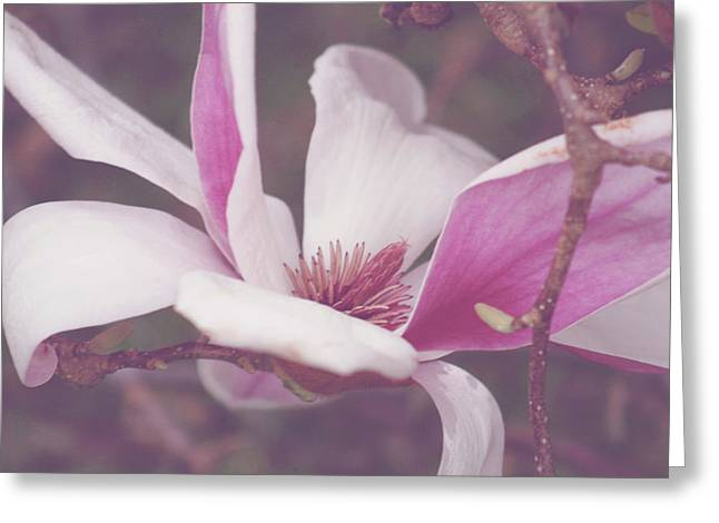 Chinese Magnolia Bloom Greeting Card by Toni Hopper