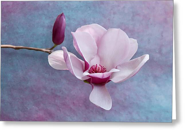 Chinese Magnolia Flower With Bud Greeting Card