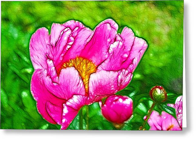Chinese Peony Flower Greeting Card
